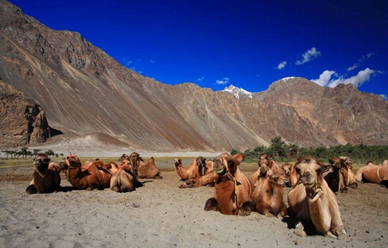Ladakh tours, where to spend summers in India, best hill stations in North India