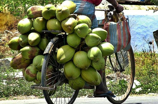 green coconuts on wheels in India, green coconut water on beaches, Indian summer beach holidays