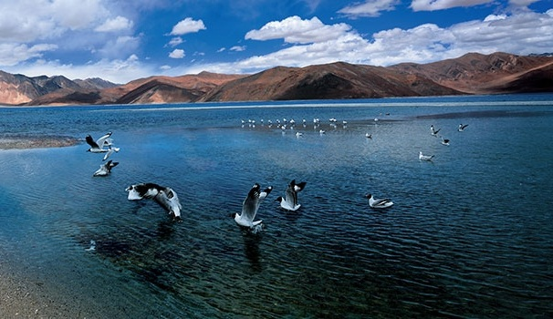 different forms of kashmir adventure, bird watching in ladakh lake, adventure travel in India