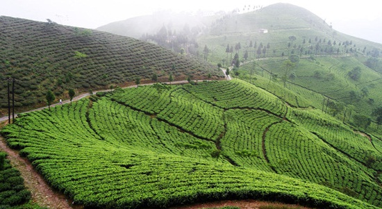 darjeeling tea estates, darjeeling toy train, hill stations of India, green travel india
