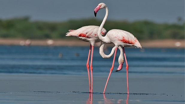 Bird sanctuaries in Andhra Pradesh, natural parks in India, bird watching destinations in India