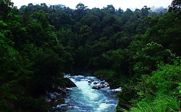 ecotourism in Kerala, sightseeing in Kerala, Kerala silent valley