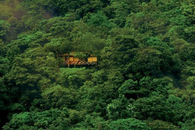 Vythiri-Resort-tree-house (1)