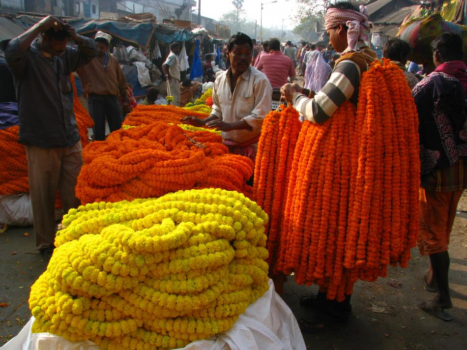 Kolkata mullik ghat flower market details, cheapest flights to Kolkata