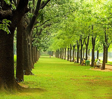 green cities of India, green travel tips, Indian Eagle travel blog, world environment day article