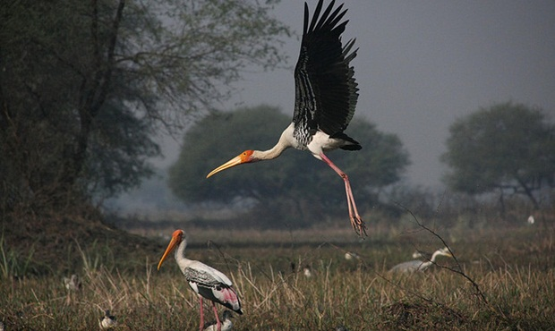 migratory birds to see in India during winter, Indian bird sanctuaries, India travel stories
