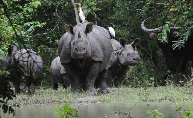 Kaziranga National Park, Northeast India trips, IndianEagle flights, wildlife travel