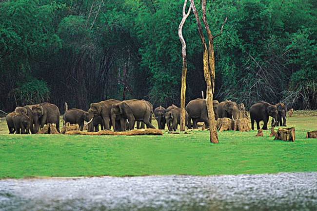 Thekkady in Kerala is World's Top Emerging Tourist Place