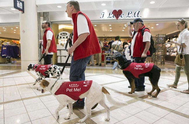 Therapy Dogs at Airports for Stressed Travelers in the US and India