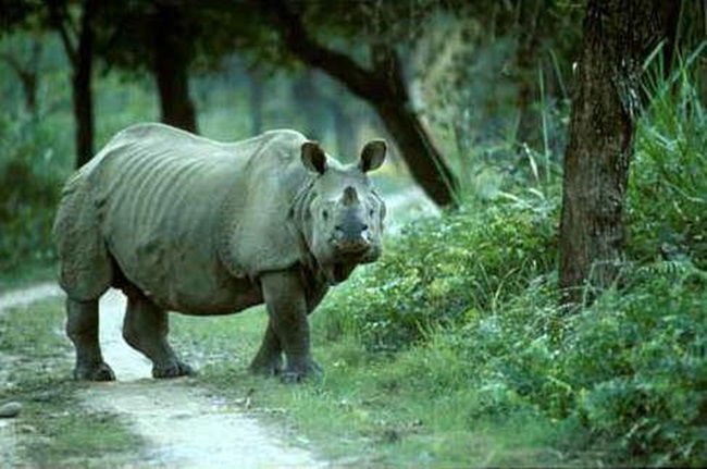 northeast India, kaziranga national park, Prince William and Kate Middleton', UNESCO world heritage site