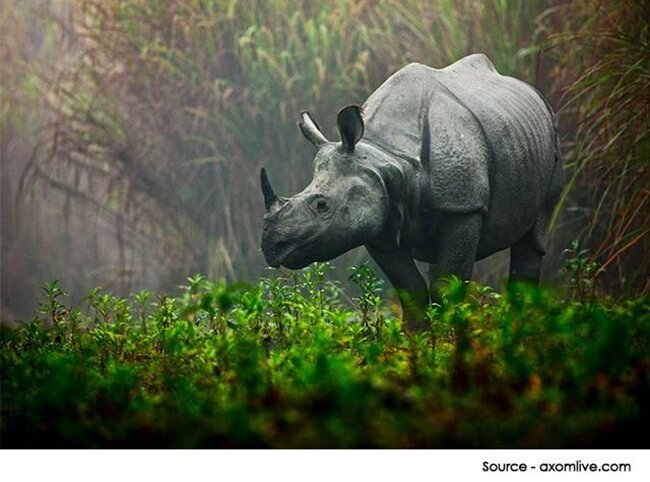 Proposed Delhi-Assam Tourist Train Kaziranga Express to Explore Wildlife of Northeast India